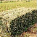 Small Square Hay Bale